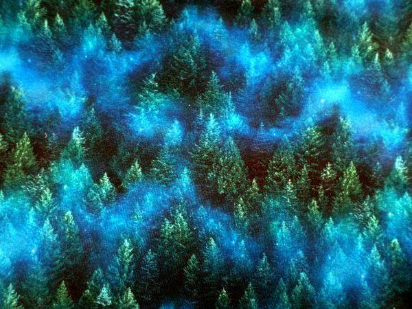 Bavlněný úplet stromy- teplákovina